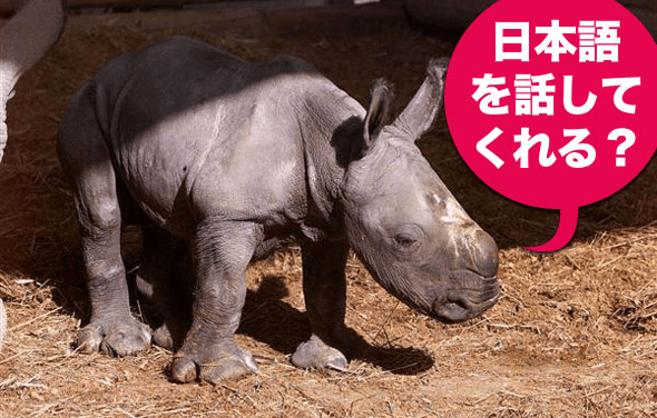 Rhinospike Helps You Get Text Read Aloud by Native Speakers