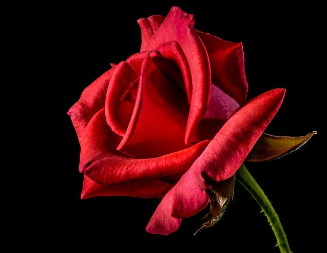 romantic words in spanish are like red roses