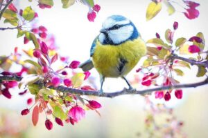 seasons in italian - spring bird