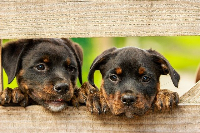 german male dog names for rottweilers