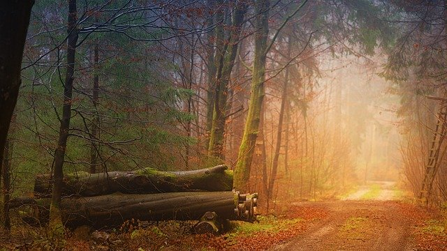 funny phrases in german: auf dem Holzweg sein - to be on the wood way